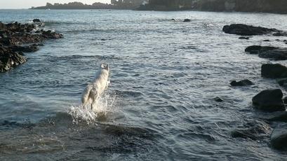 Photo représentative de l'entrainement de chien sportif
